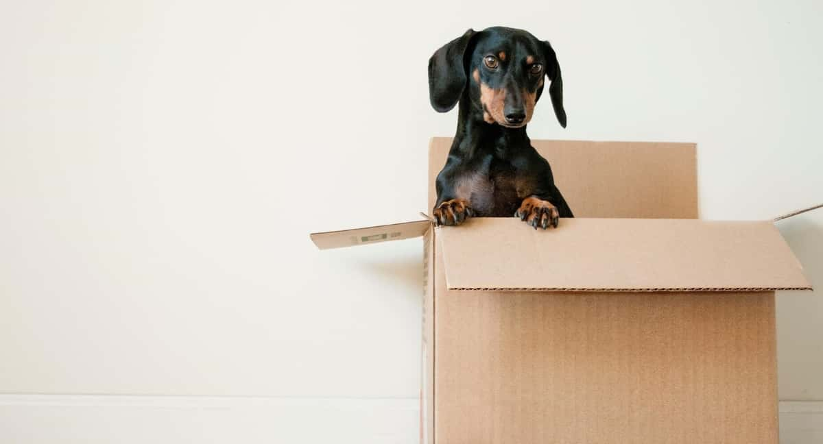 Items Movers Can't Move – Safety Standards 1