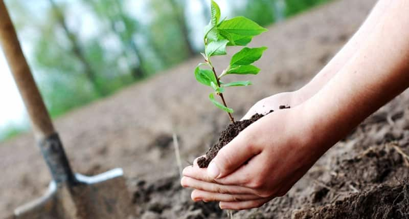 What Are Legal Considerations for Environmental Protection