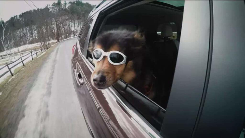 Enjoying a Dog's Company on the Road