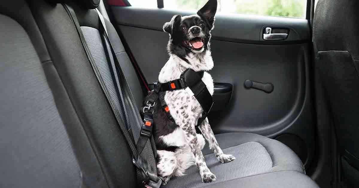 Travel For Dogs