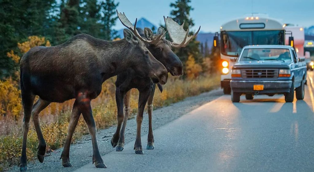 The Issue of Animals Crossing